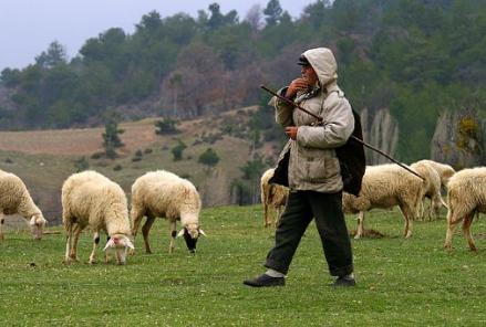 Çoban Arayanlar
